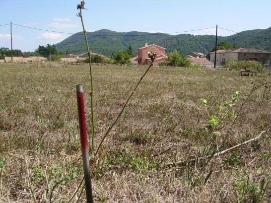 Vente Terrain 1 pièces SAINT FLORENT SUR AUZONNET 30960