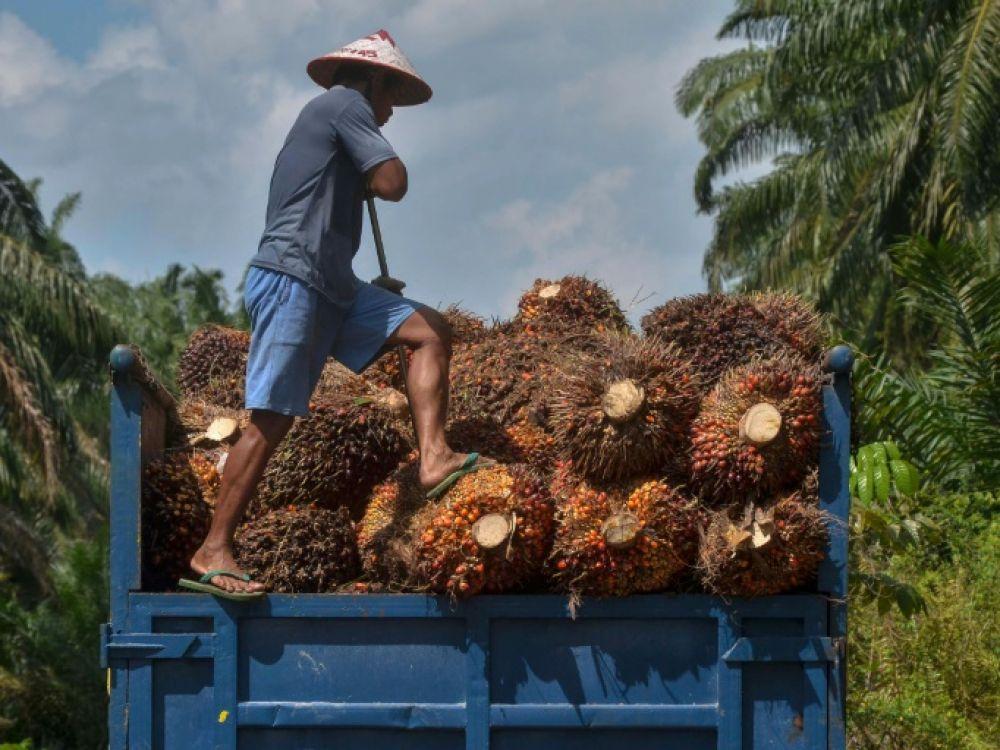 Une pub contre l'huile de palme critiquée par un acteur majeur du secteur